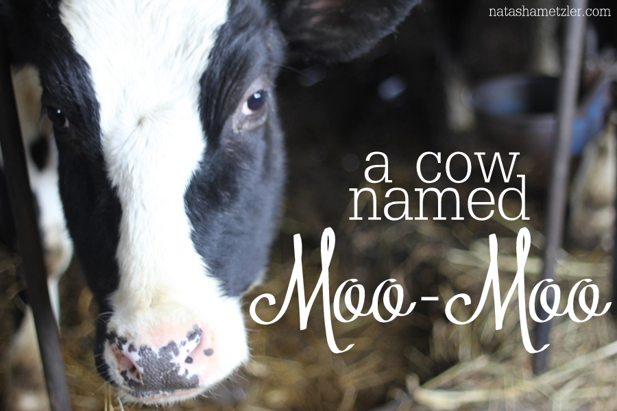 a cow named Moo-Moo {the thing about dairy farmers}